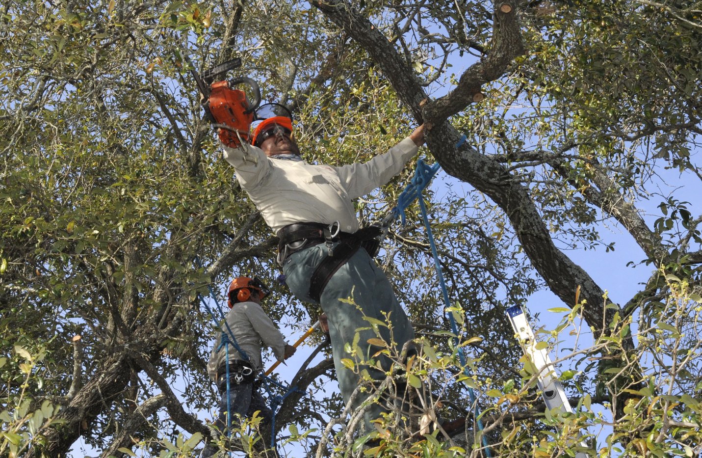 How Do You Know If a Tree Needs Pruning?